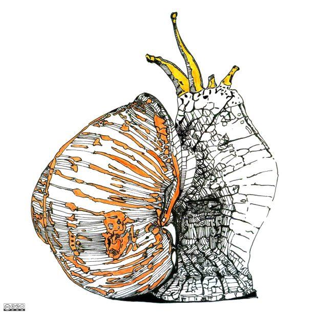 Escargots-Études_01