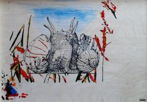 Escargots (étude-3)