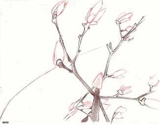 Cerisier (bloom-1)
